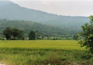 countryside view near Huay Tung Tao