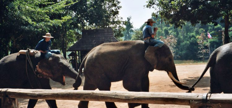 Watching elephants in a responsible manner