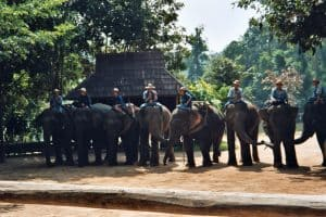 elephants and their mahouts in Lampang