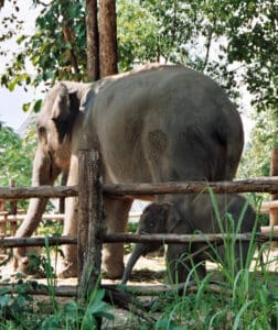 mother and child elephant Lampang