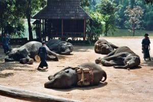 elephant show at Elephant Conservation Center in Lampang