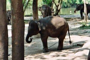 watching elephants in Lampang