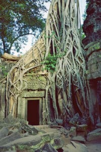 Ta Prohm forces of nature