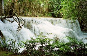 wonderful nature at Kuang Si falls