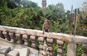 monkey at temple near Phnom Sampeau