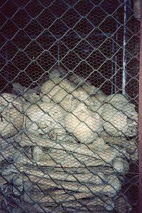 skulls and bones in the killing caves
