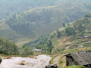 ethnic hill tribes of Sapa: rice terraces view from Cat Cat village