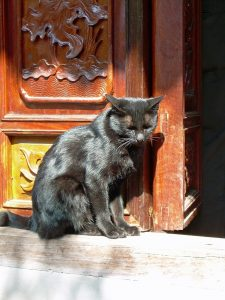 sunbathing cat at entrance of Old Pillar Pagoda