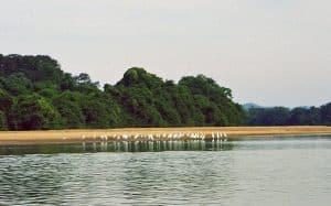 animal wildlife along Tonle Sap river around Voen Sai