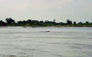 spotting Irrawaddy dolphins in Kampi