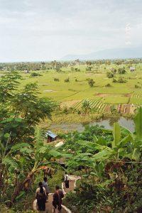 rice field at Phnom Chnok