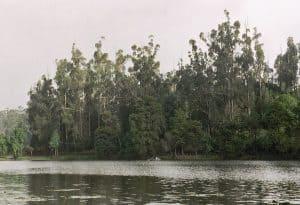 foresty Kodai