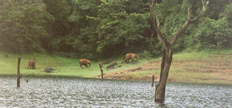 Trip to Periyar Wildlife Sanctuary