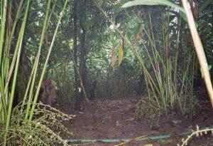 so-called plantation in Kumily