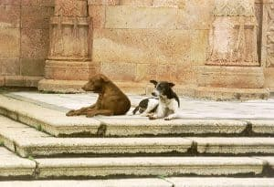 dogs chilling out back in Chennai